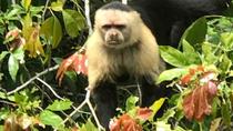 Monkey Island & Wounaan Village, Panama City, Cultural Tours