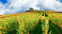 Small-Group Champagne Tasting Day Trip from Paris with Moet et Chandon and Reims Cathedral Visit,...