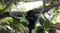 Community Baboon Sanctuary, Belize City, 4WD, ATV & Off-Road Tours