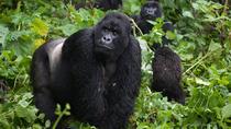 2 Days Rwanda Gorilla Safari, Kigali, Cultural Tours