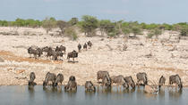 3 Days Etosha National Park Camping, Windhoek, Hiking & Camping