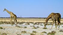8 Day Sossusvlei, Swakopmund and Etosha National Park (Camping), Windhoek, Hiking & Camping