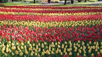 Private Day Tour of Tulips and Windmills including a Pancake Lunch, Amsterdam, Day Trips