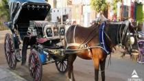 Day Tour to Luxor City Tour By Horse Carriage in Egypt, Luxor, Horse Carriage Rides