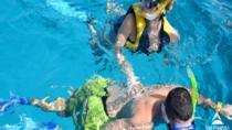 Snorkeling Trip to Tiran Island in Egypt, Sharm el Sheikh, Day Cruises