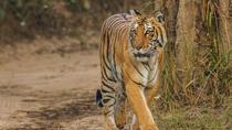 Tiger Safari at Jim Corbett National Park, New Delhi, Attraction Tickets
