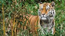Tiger Safari at Pench National Park, Maharashtra, Attraction Tickets