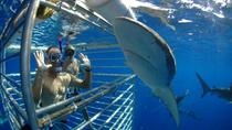 Shark Cage Diving In Oahu, Oahu, Helicopter Tours