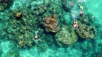 Ningaloo Reef Half-Day Snorkeling Bonanza from Glass Bottom Boat, Exmouth, Glass Bottom Boat Tours