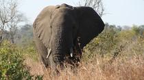 Knysna Elephant encounter, Garden Route, Day Trips