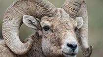 Evening Private Wildlife Safari in RMNP from Estes Park, Estes Park, Private Sightseeing Tours