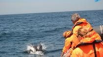 Dolphin Watching from Portimao, Portimao, Dolphin & Whale Watching