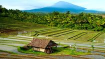 Day Trip to Northern Bali, Kuta, Day Trips