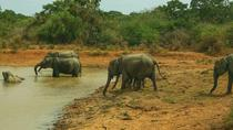 Private Day Tour: Yala National Park Safari Tour from Galle, Galle, Attraction Tickets