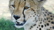 3 Days Daily Mara Budget joining shared safari, Nairobi, Cultural Tours