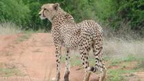 Moholoholo Rehabilitation Centre, Kruger National Park, 4WD, ATV & Off-Road Tours