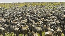 10 Days Serengeti Wildebeest Migration Safari, Arusha, Private Sightseeing Tours