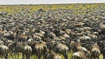 10 Days Serengeti Wildebeest Migration Safari, Arusha, Private Sightseeing Tours