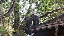 Monkey Forest and Ubud Art Tour in Bali, Bali, null