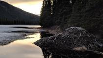 Denali National Park Walking Tour, Denali National Park, 4WD, ATV & Off-Road Tours