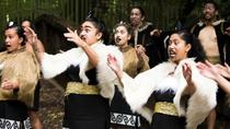 Maori Experience including Hangi Dinner and Guided Kiwi Tour, Christchurch, null