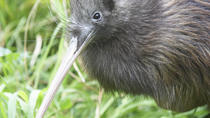 Willowbank Wildlife Reserve Day Entry & Guided Kiwi Tour, Christchurch, Cultural Tours