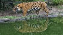 Private Day Trip to Sundarban from Khulna, Bangladesh, Private Day Trips