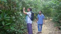 Private Tour: Sreemangal Day Tour of Lowacherra National Park, Madhabpur Lake and Baikka Beel...