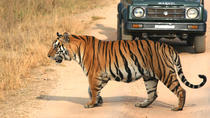 5-Hour Tiger Safari to Panna National Park from Khajuraho, Khajuraho