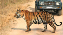 Private Tiger Safari to Panna National Park from Khajuraho, Khajuraho, Safaris