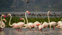 Private Tour: Full-Day Bird Safari Excursion to Bhigwan from Pune, Pune, Private Day Trips