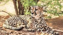 2-Days : Lake Manyara National Park to Ngorongoro Crater, Arusha, Attraction Tickets
