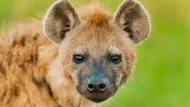 3-Days : Lake Manyara to Ngorongoro Crater to Tarangire National Park, Arusha, Attraction Tickets