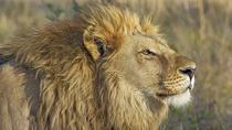 4-Days : Lake Manyara to Serengeti Plain to Ngorongoro Crater, Arusha, Multi-day Tours