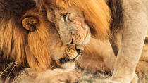 5-Days : Big 5 Tanzania Safari, Arusha, Multi-day Tours