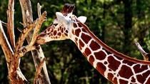 6-Days : The Best Adventure Tanzania Safari, Moshi, 4WD, ATV & Off-Road Tours