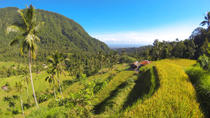 Bali Day Tour of Sunrise Watch at Kintamani, Lemukih Rice Field and Sekumpul Waterfalls, Bali