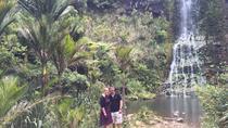 Piha and Karekare Rainforest Wine Tour from Auckland