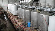 Villa Maria Estate Scenic Vineyard Odyssey from Auckland