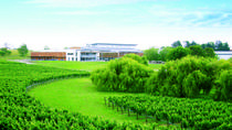 Wine Makers Experience from Auckland, Auckland, City Tours