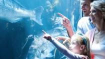 Access Entrance Ticket to AquaRio Aquarium - Including Transport and Ticket, Rio de Janeiro,...