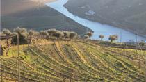 Douro Valley Wine Tour: Visit to Three Vineyards with Wine Tastings and Lunch, Porto