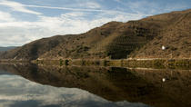 Douro Wine Cruise with lunch on board and two vineyards, Northern Portugal, Lunch Cruises