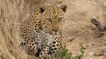 KRUGER PARK PRIVATE VEHICLE FULL-DAY SAFARIS, Kruger National Park, 4WD, ATV & Off-Road Tours