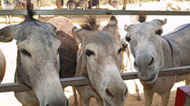 Half-Day Animal Sanctuary Tour in Aruba, Aruba, null