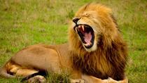 Tanzania Kifaru Safari, Arusha, Private Sightseeing Tours