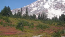 Private Mount Rainier Tour from Seattle, Seattle, Private Sightseeing Tours