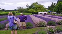 Sequim Lavender Festival Tour from Seattle, Seattle, Full-day Tours
