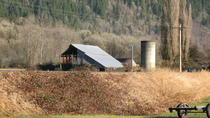 Wild Eagles and Salmon Wildlife Tour from Seattle, Seattle, Eco Tours