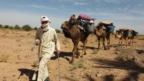 CAMEL TREK MOROCCO 8 DAYS, Ouarzazate, Nature & Wildlife